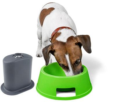Protege el espacio de tu mascota